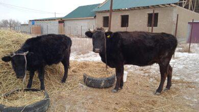Photo of «Начну с двух коров, потом – больше»